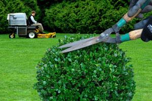 Entretien de jardin (ponctuel ou à l'année)